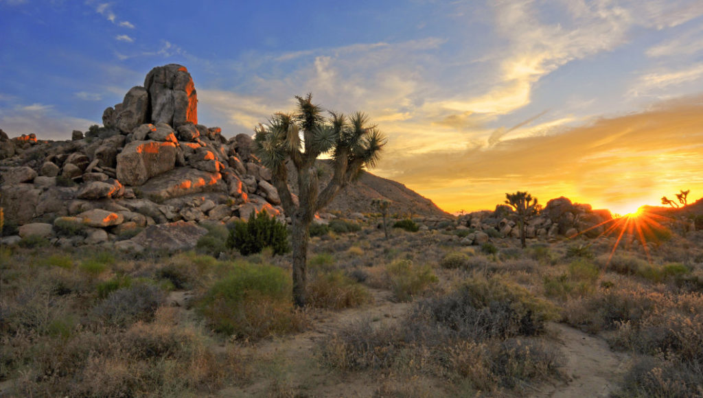best camping california joshua tree